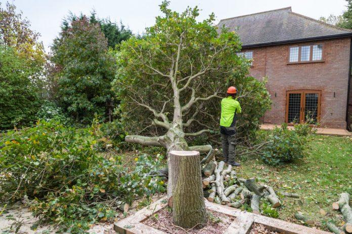 1000 Trees To Go In Shankill