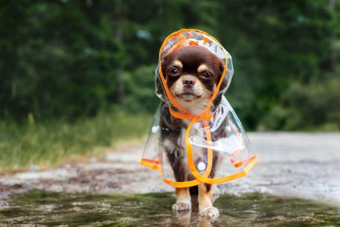 Electric Picnic Festival-Goers Facing Weekend Of Wet Weather