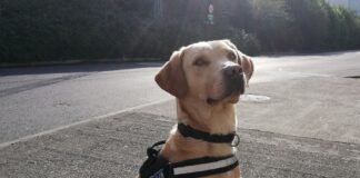 Revenue's Detector Dog Bailey Sniffs Out Drugs Labelled As Clothes In Dublin Parcel Hub