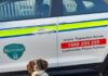 Waffle The Sniffer Dog Uncovers Over €1.24 Million Of Tobacco at Dublin Port