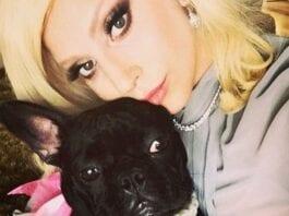 Lady-Gaga's-Dogs-Stolen