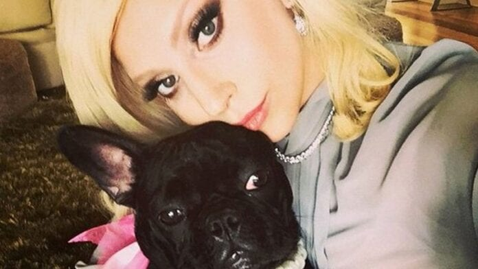 Lady-Gaga's-Dogs-Stolen