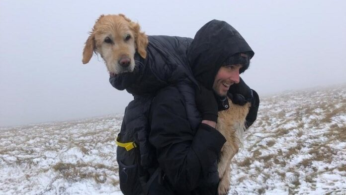 Lost-Dog-Found-In-Wicklow-Mountains
