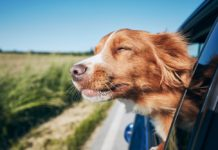 Retrievers, Cocker Spaniels, and Labradors Named As Ireland's Most Paw-Pular Dogs On Instagram