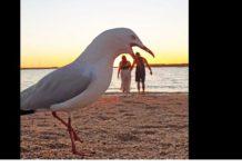 """seagulls"""